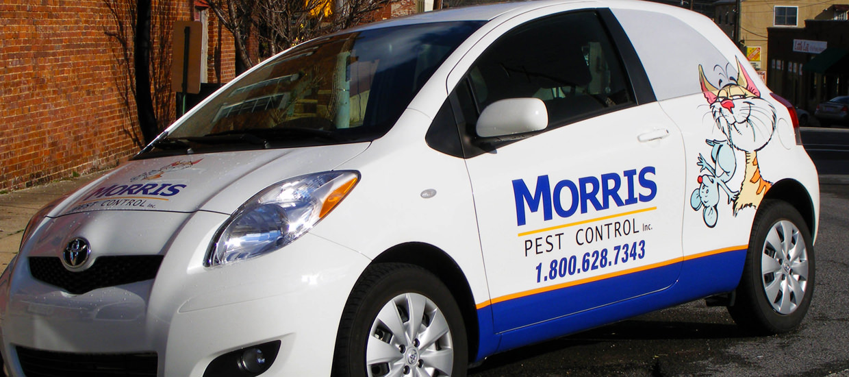 Vehicle wrap design for Morris Pest Control, a pest control business located in Fort Payne, Alabama.